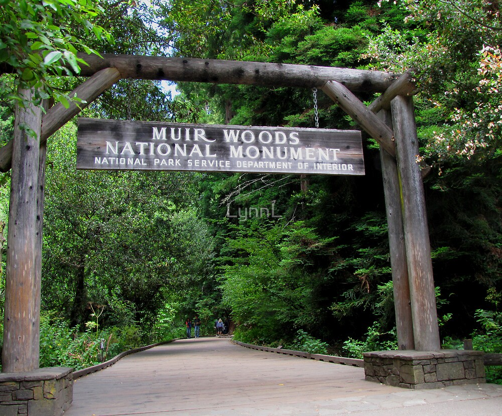 Muir Woods National Monument by LynnL