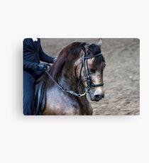 Paso Fino Show Horse Canvas Print