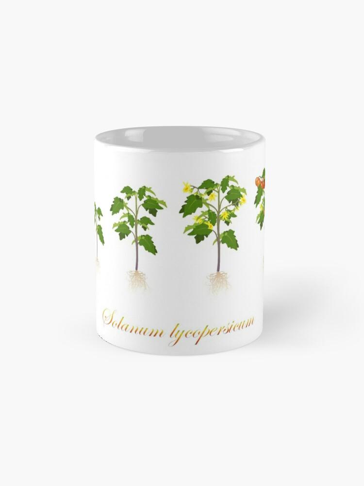 Alternate view of Solanum lycopersicum development  Mug