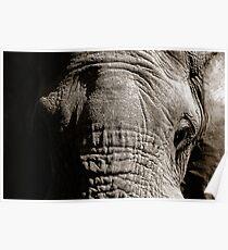 Kruger National Park, South Africa. 2009  III Poster