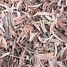 Dried eucalyptus leaves by Natalie Board