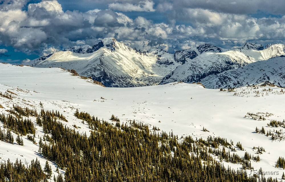 Forest View Of Longs Peak by Gregory J Summers