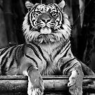 Tiger Stripes by Kiwikels