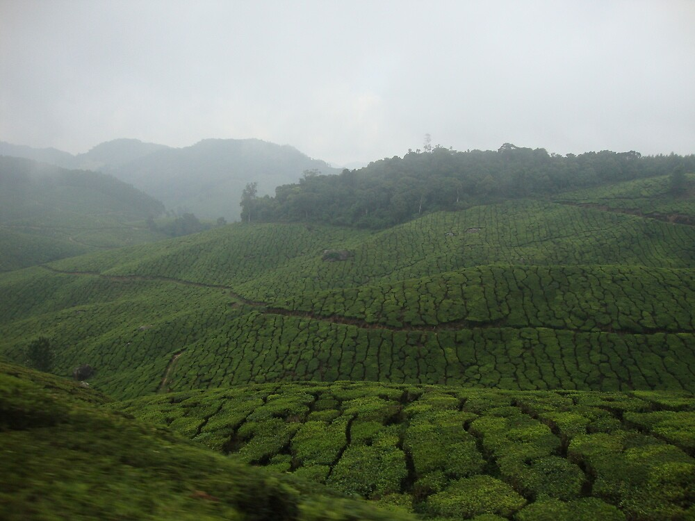 Green Tea Waves - India by vasanthkumar