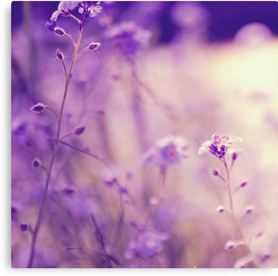 Forget Me Not by mariakallin