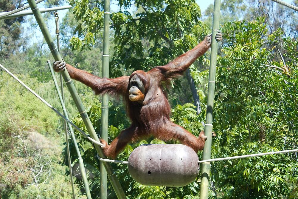 Monkeying Around by AmandaKopcic