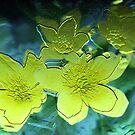Floral Relief by Milena Ilieva