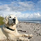 Ditte loves to watch the birds at the beach by Trine