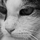 Cat in Thought by Matthew Hutzell