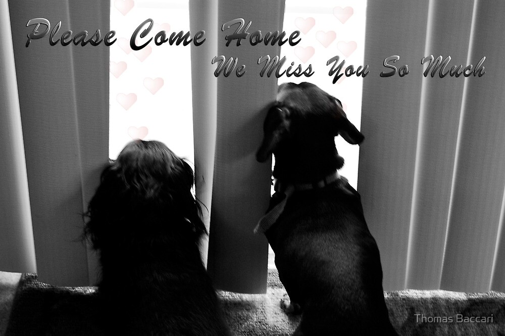 Please Come Home by TJ Baccari Photography