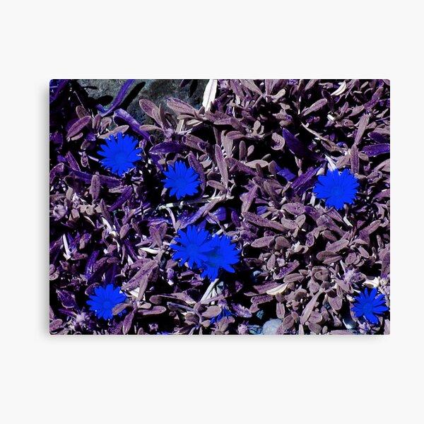 Blue Petals Canvas Print