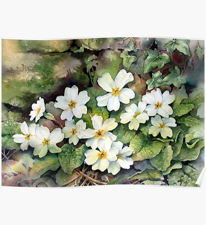 Primroses by a mossy wall Poster