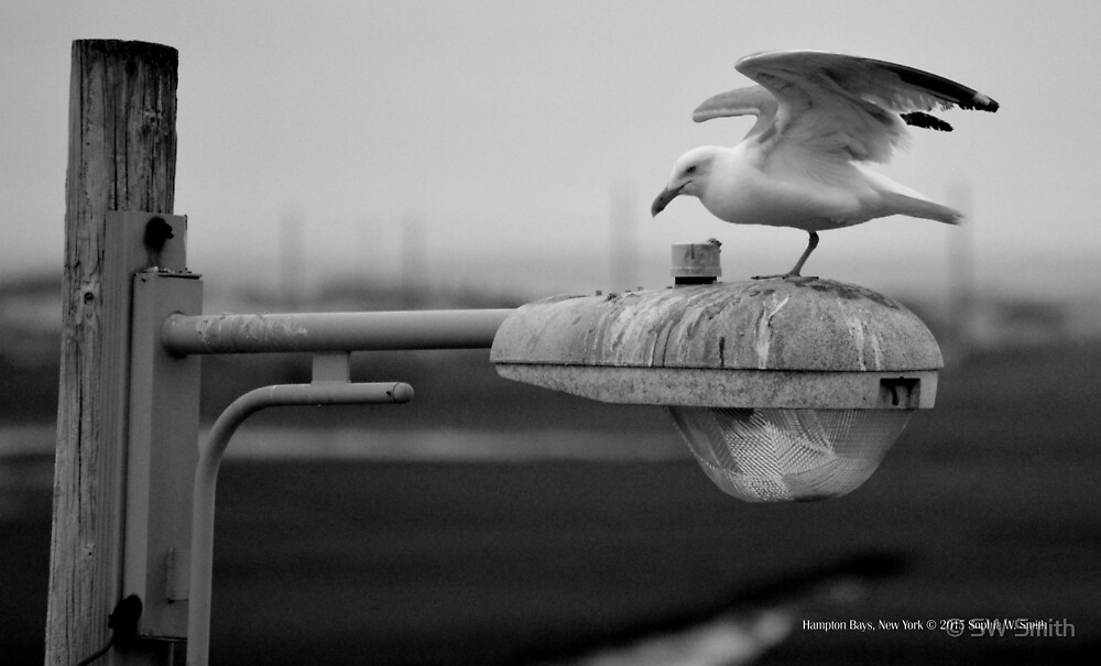 Landing Of A Seagull | Hampton Bays, New York  by © Sophie W. Smith