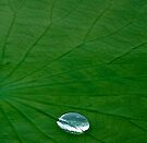 Lily Pad... Up Close & Personal by Marcia Rubin