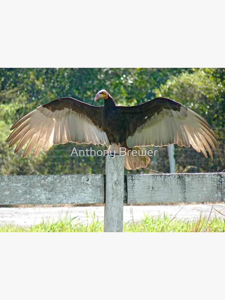 Vulture wingspan by dailyanimals