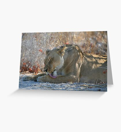 Lioness Grooming Greeting Card