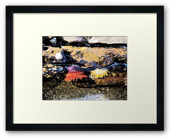 Rockpool at Lorne Beach by SuziTC