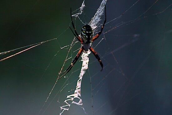 Boris The Spider by mojo1160