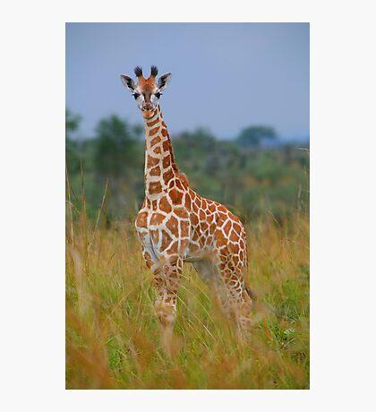 Young Giraffe On Alert Photographic Print