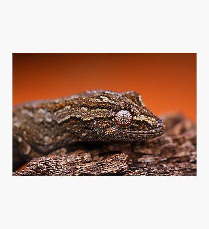 Gecko Eye Photographic Print
