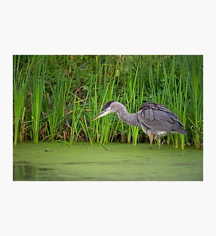 Big Bird Photographic Print