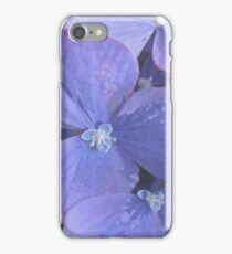 Florets of A Hydrangea Bloom iPhone Case/Skin