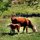Mother and Baby by Monica M. Scanlan