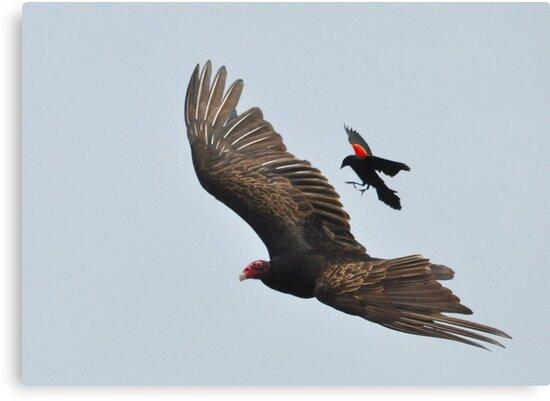Blackbird Attack! by Nancy Barrett