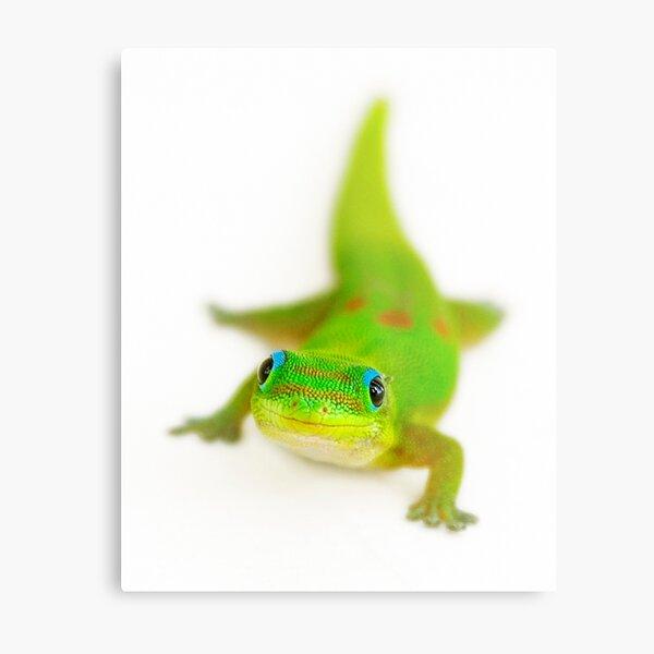 Smiling gecko Metal Print