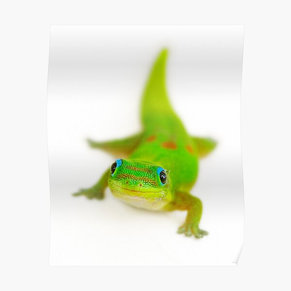 Smiling gecko Poster