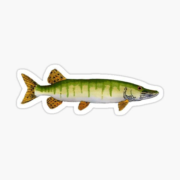 Muskellunge (Muskie) Sticker