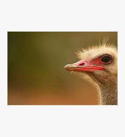Ostrich Eye Photographic Print