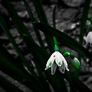 Grass and Flower - Jenolan Caves by Steven Maynard