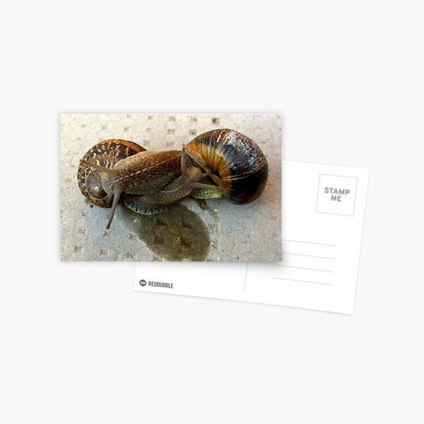 Slow Lovin' Postcard