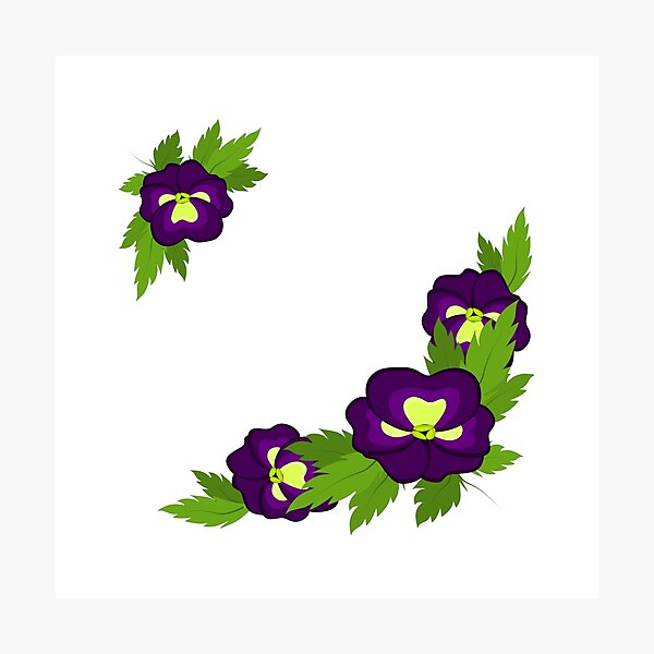 Square postcard of purple pansies Photographic Print