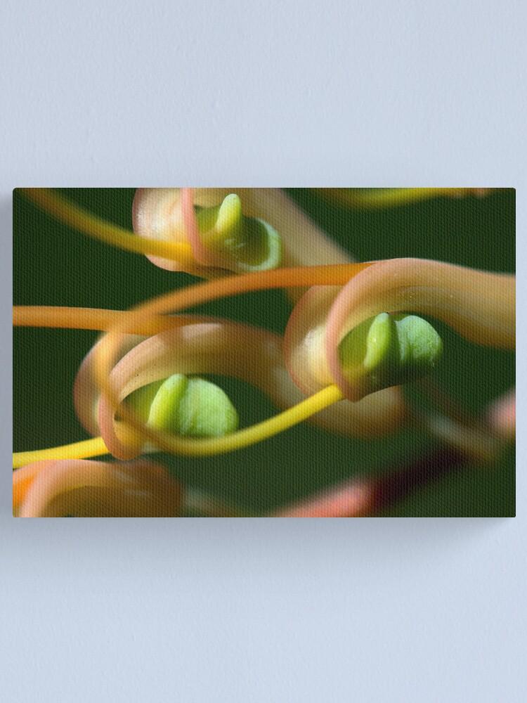 Alternate view of Grevillea dryandri subsp. dryandri Canvas Print