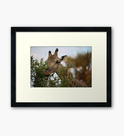 Hedge Trimmer Framed Print