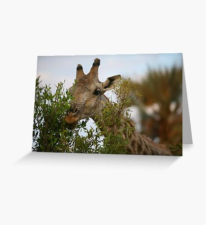 Hedge Trimmer Greeting Card