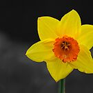 Yellow with a hint of Orange by Kerry Lunt