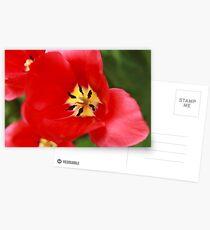 Red Tulip Blossom Postcards