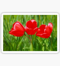 Three Tulips Sticker