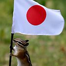 Albert Speaks for the Dolphins in Japan by Betsy  Seeton