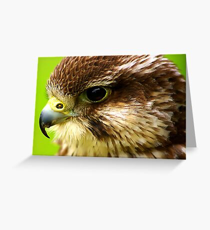 Hobby  (Falco Subbuteo) - Bird of Prey Greeting Card