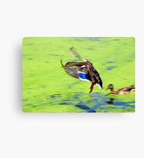 Hard Landing?? Canvas Print