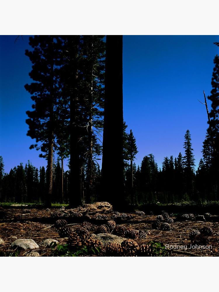 Near Laurel Lake in Yosemite N.P. (7/3/2010) by rodneyj46