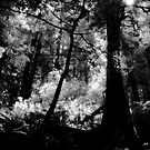 Hillside Trail, Muir Woods National Monument (8/22/2010) by Rodney Johnson