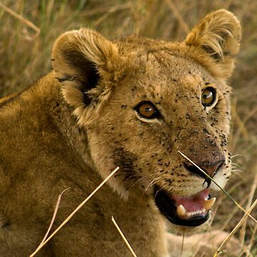 Masai Mara, Kenya. 2009 by GreenEyedHarpy