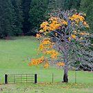 alder tree last leaves by TerrillWelch