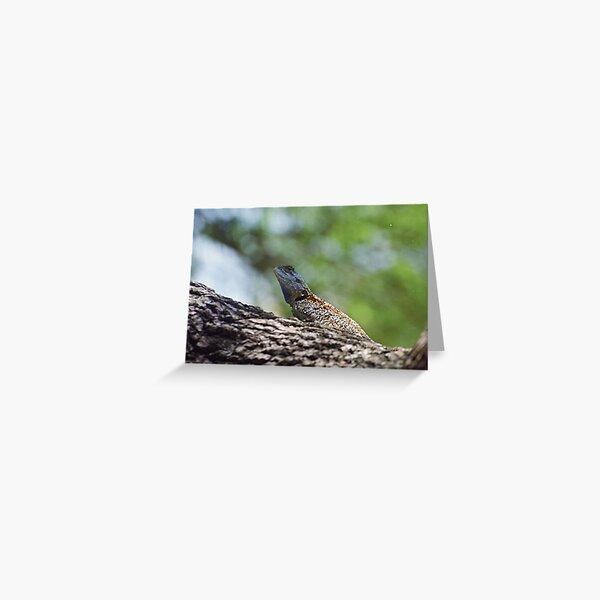 Blue headed agama lizard  Greeting Card