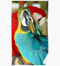 Macaws at Jungle Gardens XVIII Poster